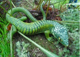 Colorful Pet Lizards More_Lizards