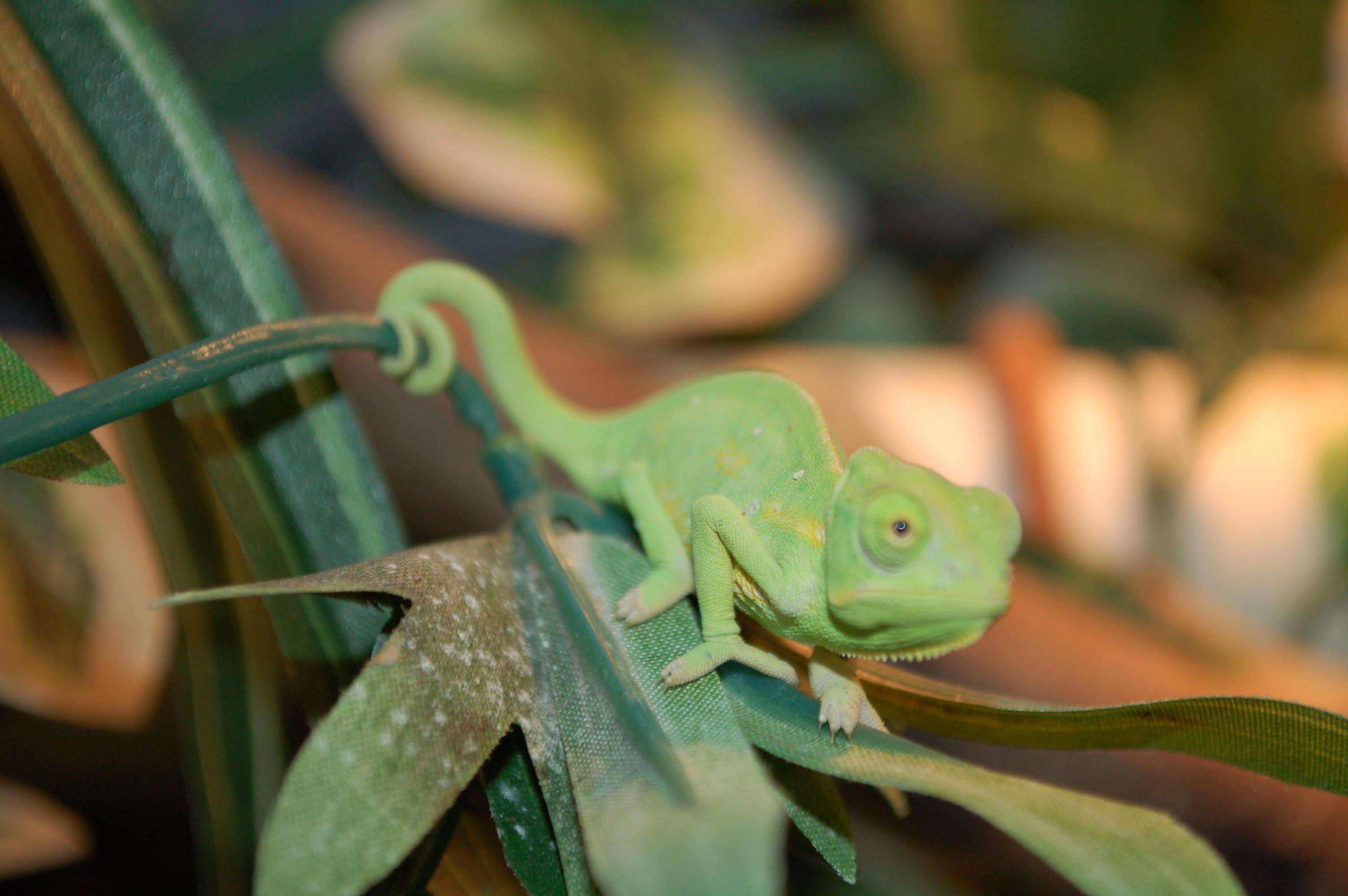 Custom Creatures Captive Bred Reptiles